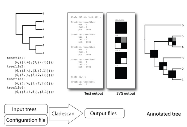 Flowchart depicting Cladescan operation
